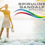 Spiruline Gandalf